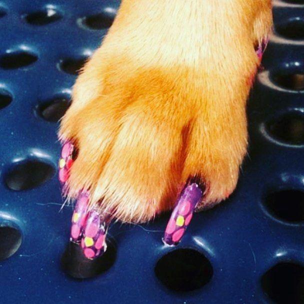 Another Great Polish Sent Into Us From Petsmart Groomer Rocha9001 Nailart Dognailpolish Dogpolish Dogs Creative Creative Grooming Dog Grooming Groomer