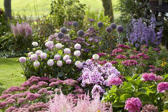 Flower Bed Dahlia Astilbe Hydrangea Phlox Sedum My