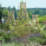 Expandable Willow TrellisesGardens Ideas, Plants Support, Gardens Sculpture, Expanded Willow, Gardens Supplies, Climbing Plants, Gardens Trellis, Vegetables Gardens, Willow Trellises