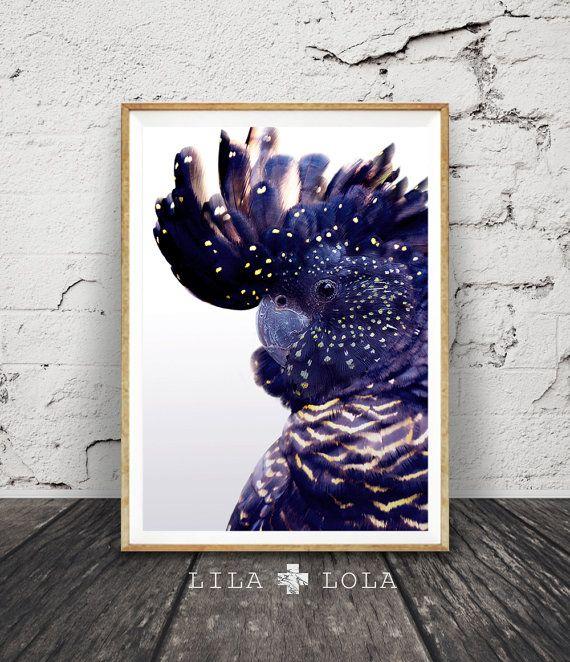 Black Cockatoo Print Australian Bird Wall Art Navy by LILAxLOLA