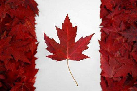 Canadian flag: red maple leaves on a snowy white background