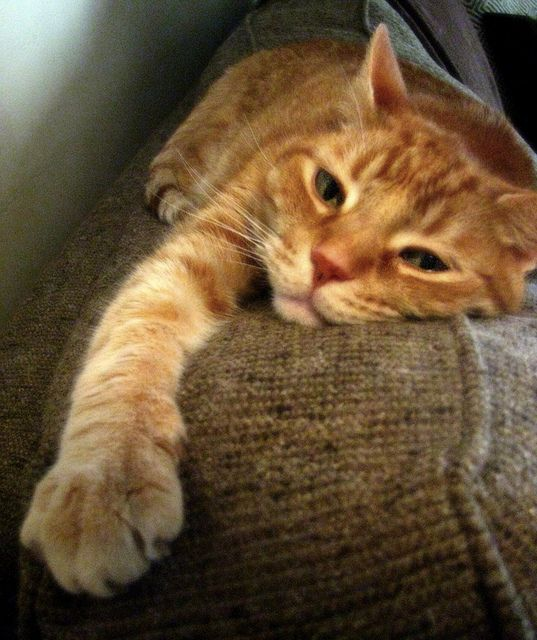 This is my Oscar kitty lounging on our new sofa. I think he approves of our choice =)