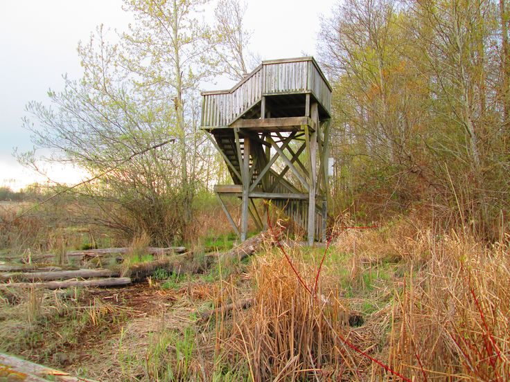 The popular lookout tower in South Arm Marshes.