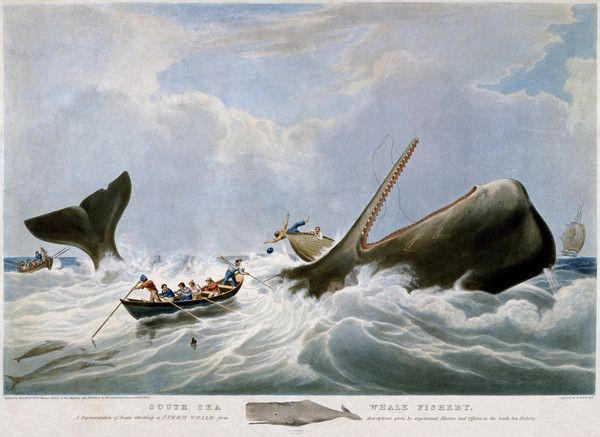 South Sea Whale Fishery, 1834 by William John Huggins from New Bedford Whaling Museum