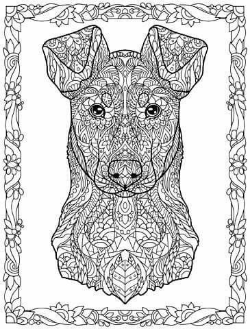 The 89 Best Animal Coloring Images On Pinterest