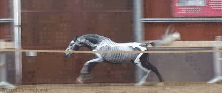 horse painted with skeleton free jumping