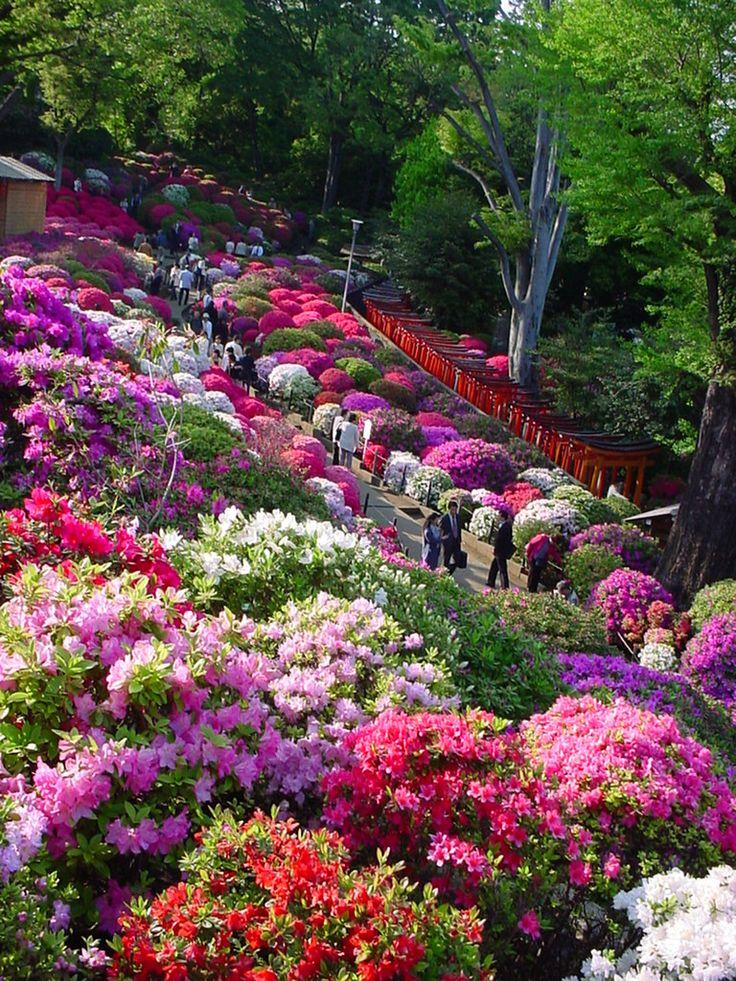 Id alement pour la plate bande du c t azal es et for Flowers for japanese garden