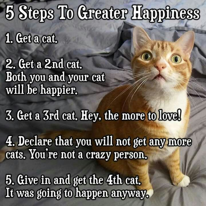 5 Steps To Greater Happiness Involves Cats Cat Quotes Funny