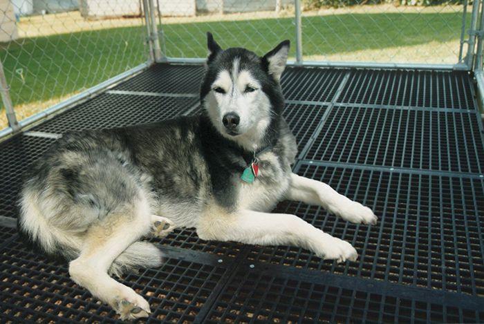 Kennel Flooring Dog Kennel Flooring Dog Kennel Kennel