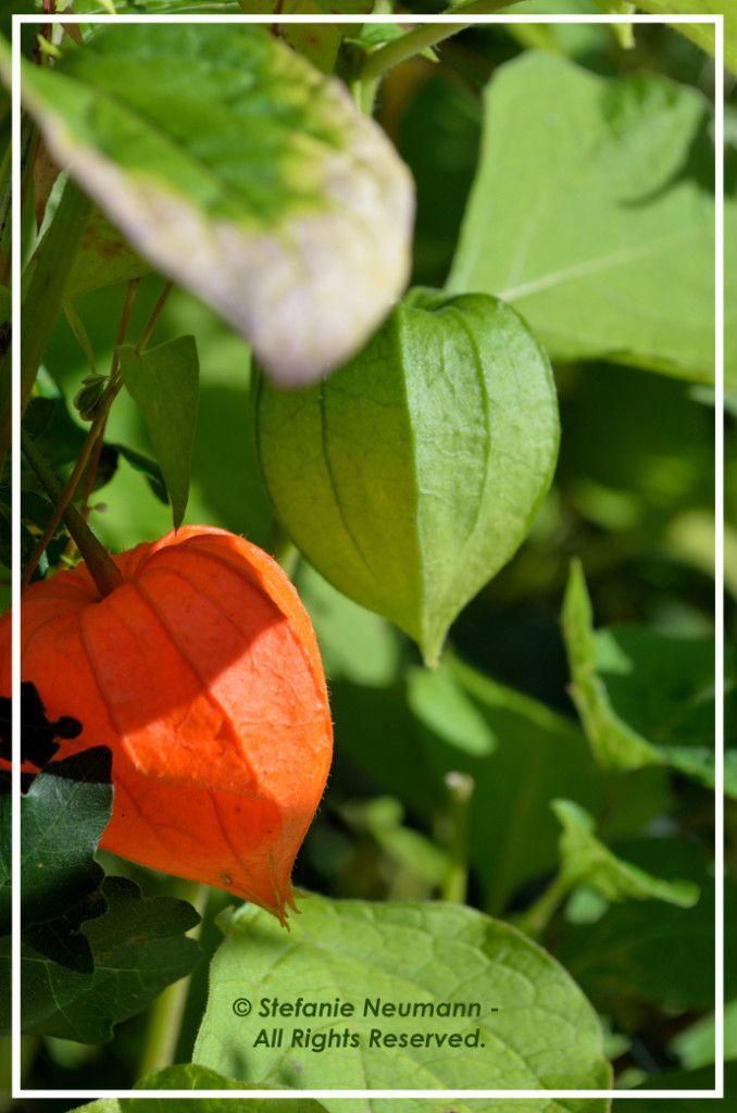 Kokopelli Bee Free Newsletter - Samhain 2016
