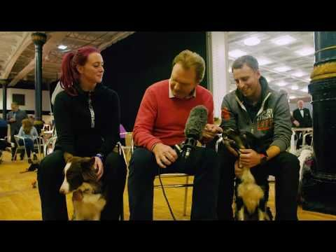 Dog Agility at Olympia 2016 We spoke to some of the Dog Agility competitors at Olympia, The London International Horse Show!  - video