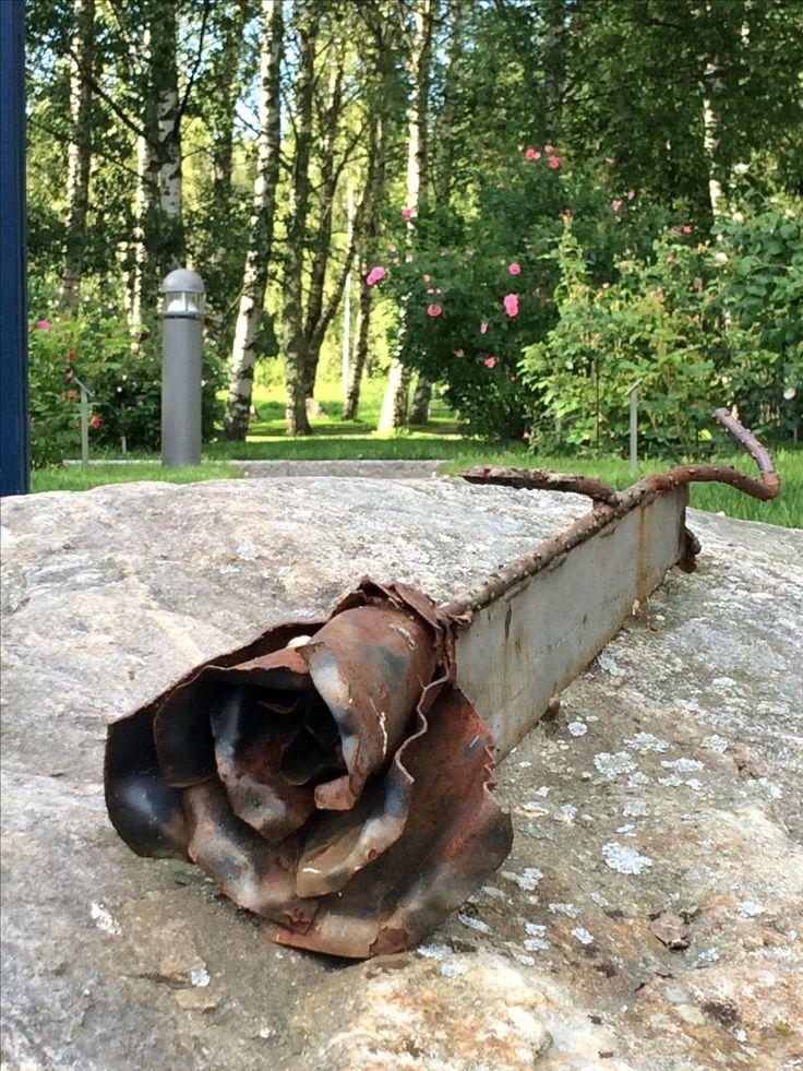 Ruusu. Erkki Hietanen, 2009, Arboretum, ruusupuisto, Vaasa
