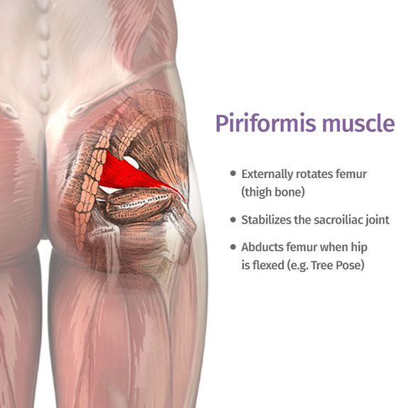 The piriformis : how can one little muscle cause so much trouble?  Yoga poses and sequences to help with piriformis syndrome -  ekhartyoga.com