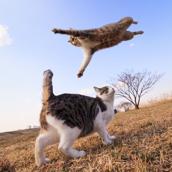 飛んでる猫「とぅ!」 下の猫「?」