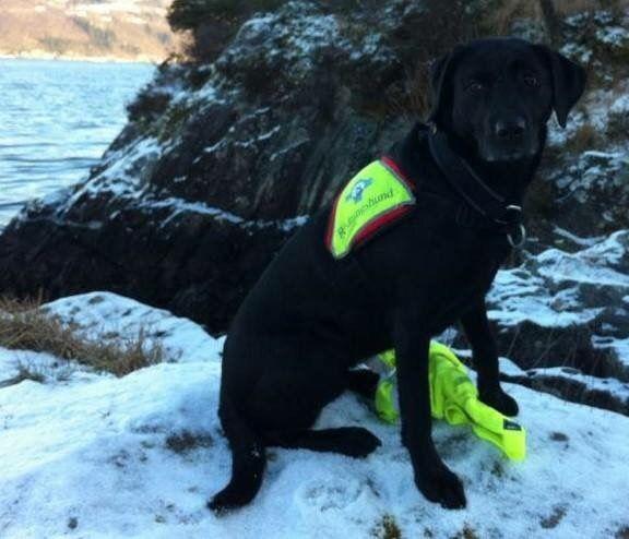 @NrhHordaland: Redningshunder i søk på Sledavarden Voss #redningshund #redningshunder @redningshunder  http://bit.ly/1L4dD9L