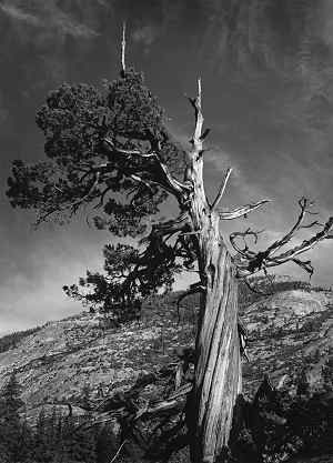 Merced Lake Country, c. 1938, Black and white photograph. National Museum of Wildlife Art, Jackson Hole, WY, Gift of Sarah S. and David H. McAlpin ) On the Trail with Ansel Adams and Georgia O'Keeffe