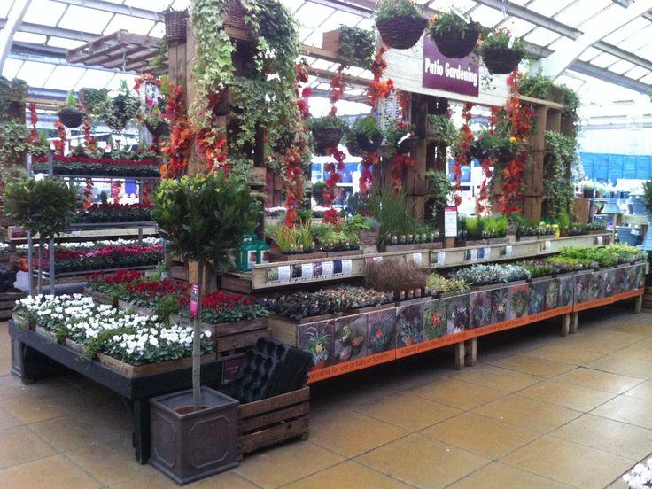 Bedding plants Squires Garden Centre Twickenham
