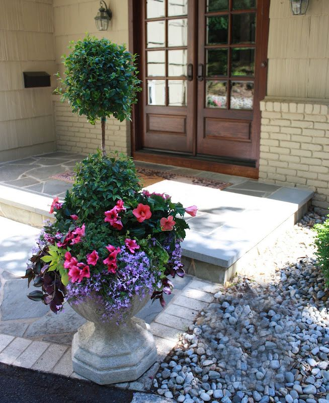 eugenia topiary container garden: pictorial of what plants she used