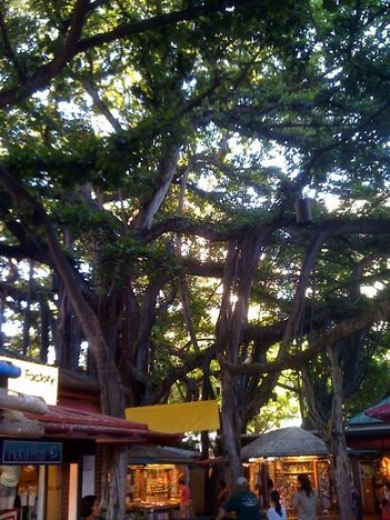 banyan tree target market The leading provider of market research reports and industry analysis on products, markets, companies, industries, and countries worldwide.
