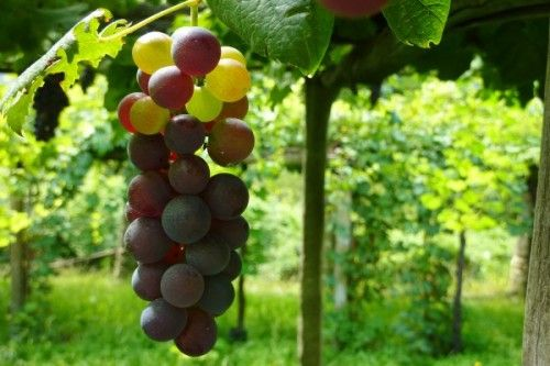 The Royal Wine Road of Torinese Wines