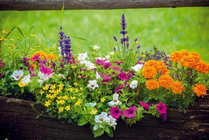 10 letných rastlín, ktoré prežiaria každý kút