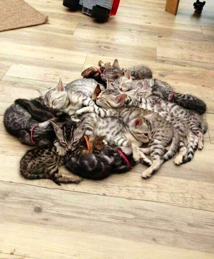 Pile 'o kittehs!
