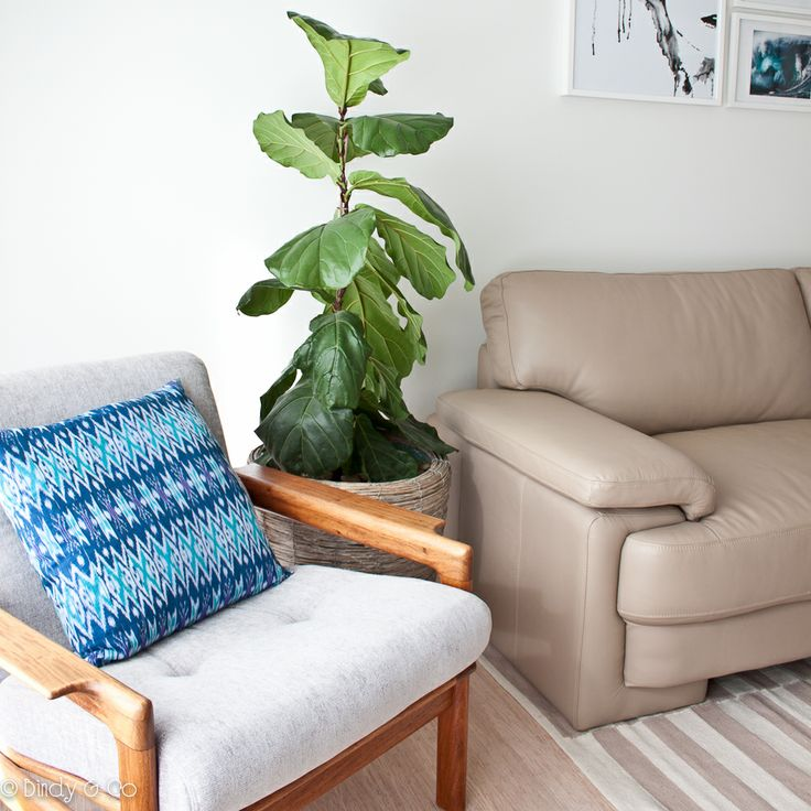Refinished danish chair, fiddle leaf fig. Project by Bindy & Co.