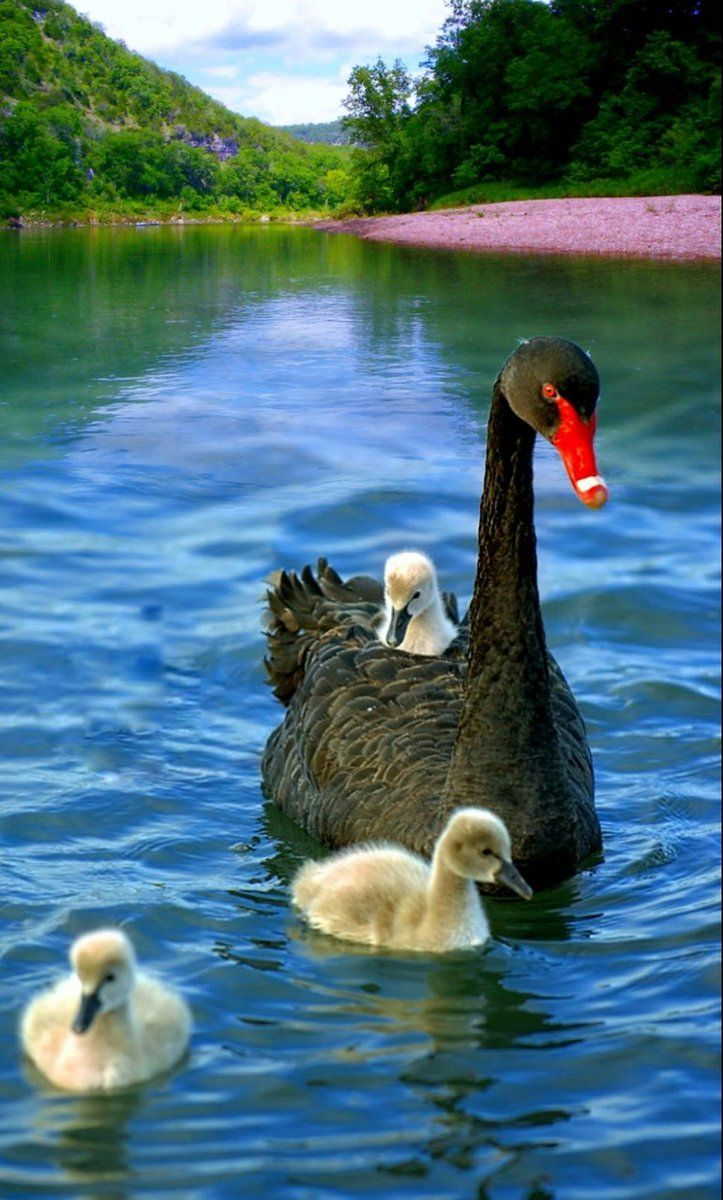 Daria 🍁 on Animals beautiful, Beautiful birds, Pet birds