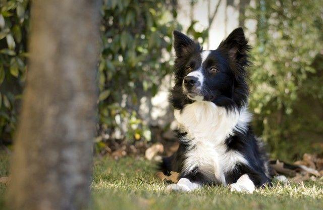 Intelligenza dei cani, si può misurare. Ecco il test e i giochi migliori per farlo