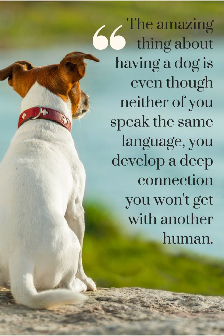 Quotes About Dog Friendship 438 Best Quotes About Dogs Images On Pinterest  Dog Quotes