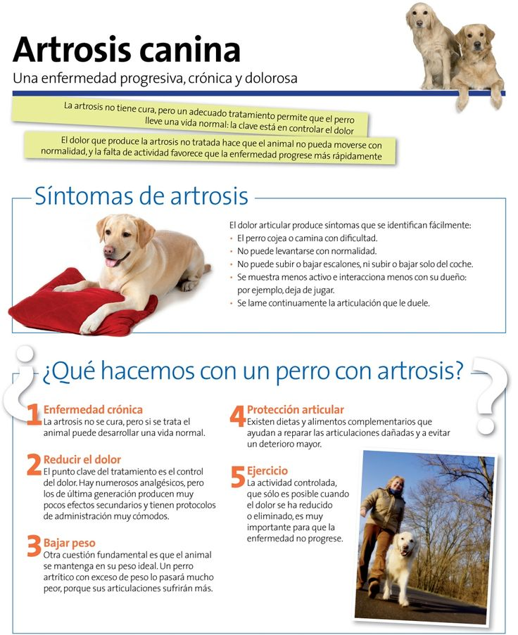 La #artrosis en perros