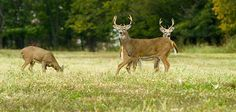 Seven Things to Know About Temperature and Deer Activity   Outdoor Life