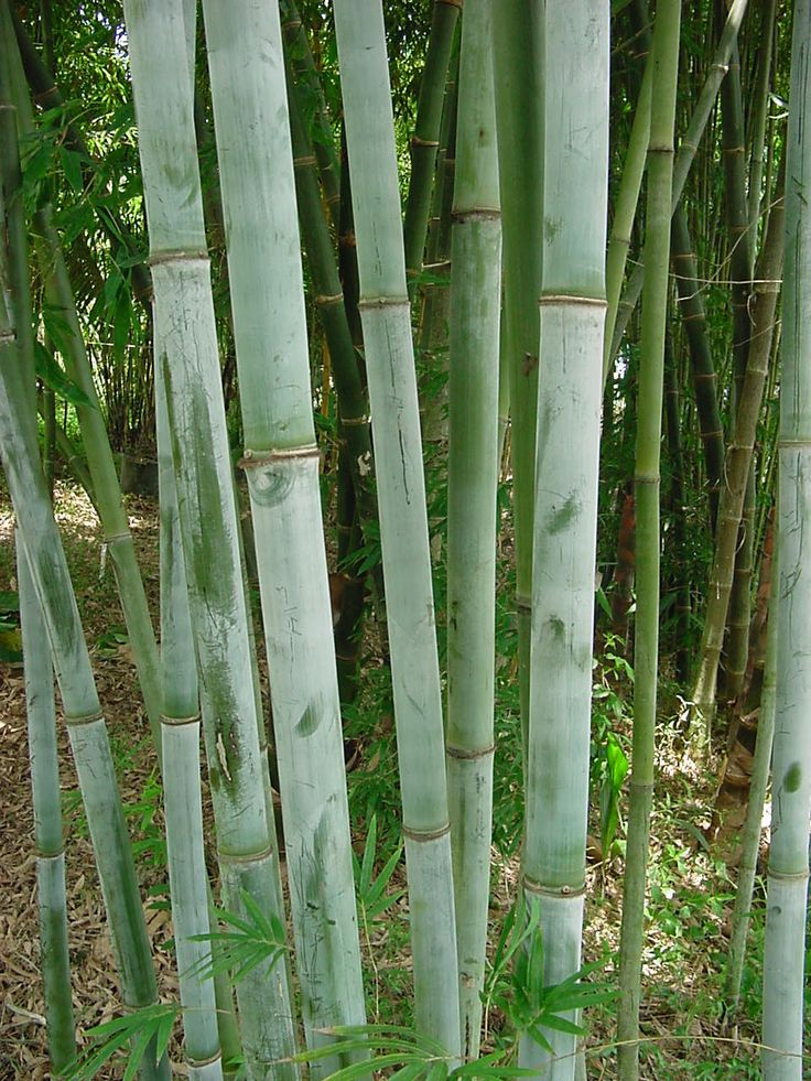 923 Best Plants And Garden Images On Pinterest Gardening Bamboo And Plants