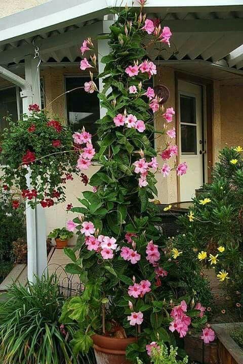 M s de 25 ideas incre bles sobre plantas colgantes de sol - Casitas en macetas ...