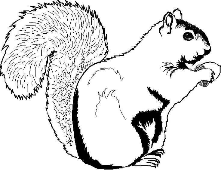 The 25+ best Squirrel coloring page ideas on Pinterest | Adult ...