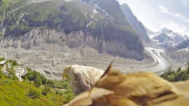 Some Hero Strapped a GoPro Camera Onto An Eagle And The Footage Is Breathtaking