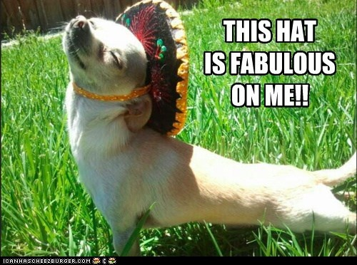 Fabulouso!Puppies, Funny Hats, Chihuahuas, Mr. Tacos, May 5, Funny Animal, Funny Dogs Pictures, Happy Dogs, Hat
