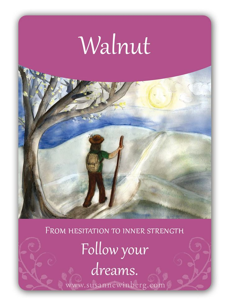 Walnut - Bach Flower Oracle Card by Susanne Winberg. Message: Follow your dreams.