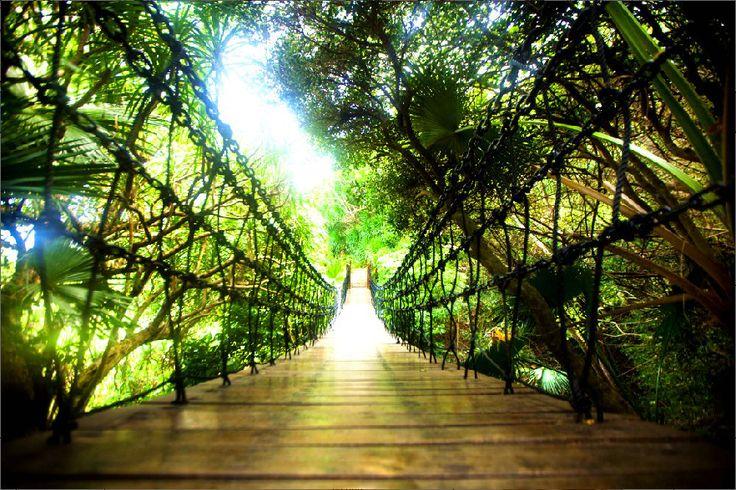 Difficult #roads often lead to beautiful #destinations.  #Sanya #Whererefreshingbegins #Nature #bridge #China #forest #drawbridge #tropical #travel #SanyaRepin #SanyaHeartstoHearts