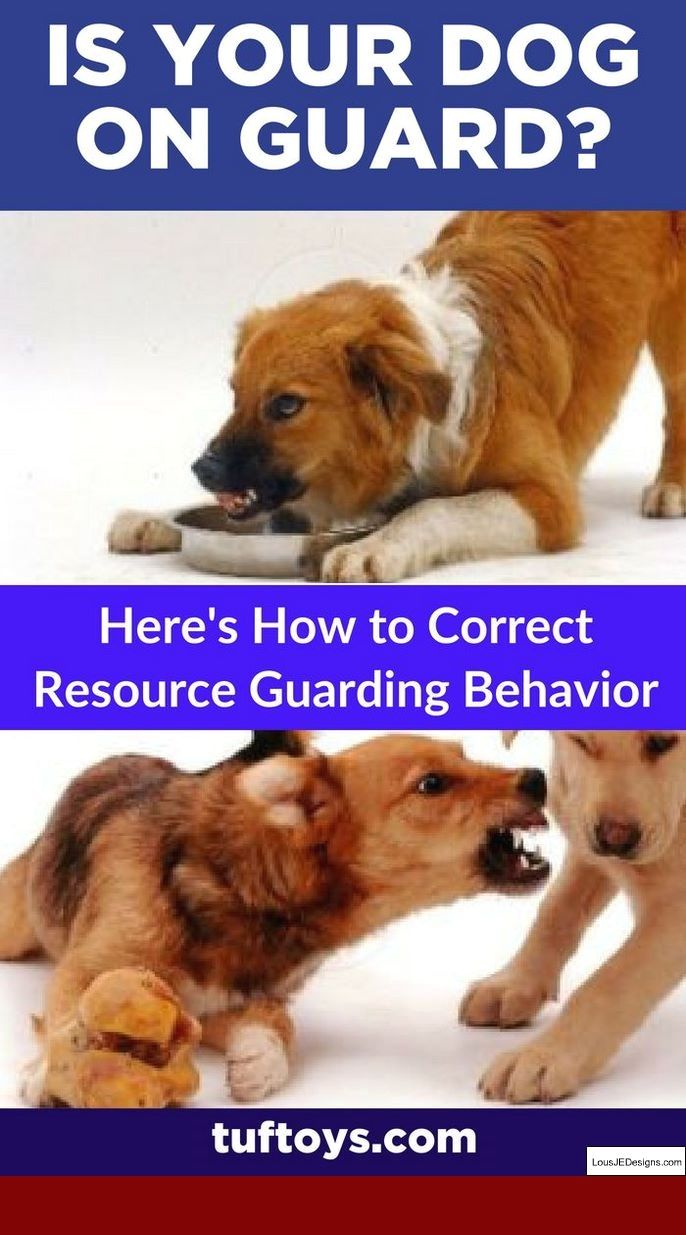 German Shepherd Dog Training Tips In Hindi Pdf And Pics Of Tips To
