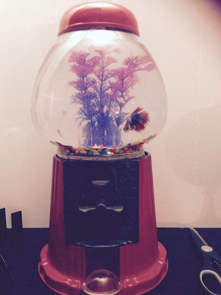260 best fish aquariums images on pinterest fish for Gumball machine fish tank