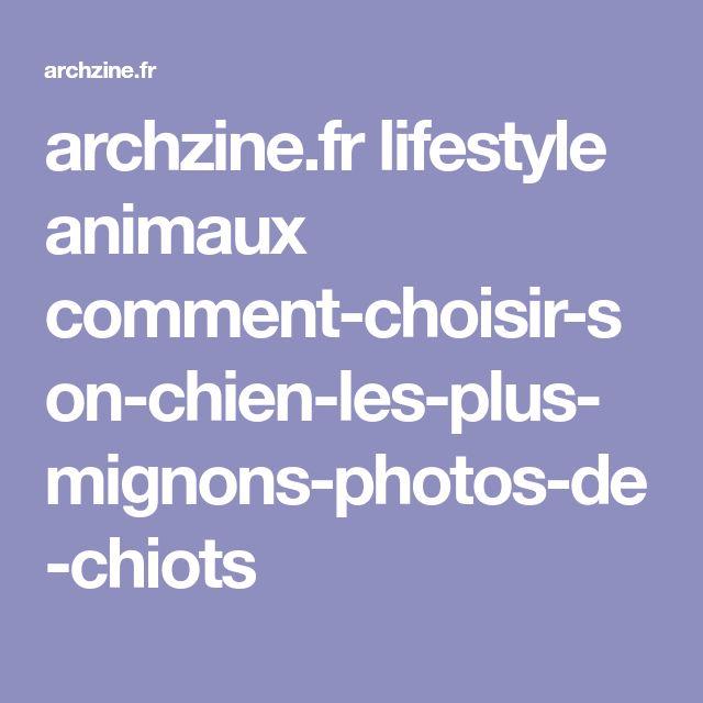 archzine.fr lifestyle animaux comment-choisir-son-chien-les-plus-mignons-photos-de-chiots