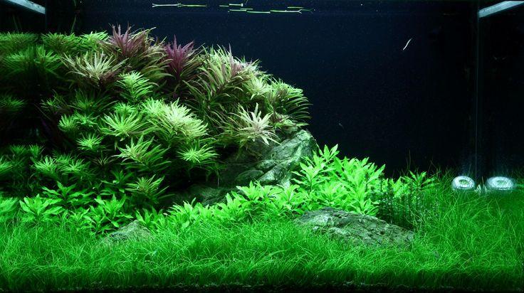 Layout 100 - George Farmer - Tropica Aquarium Plants
