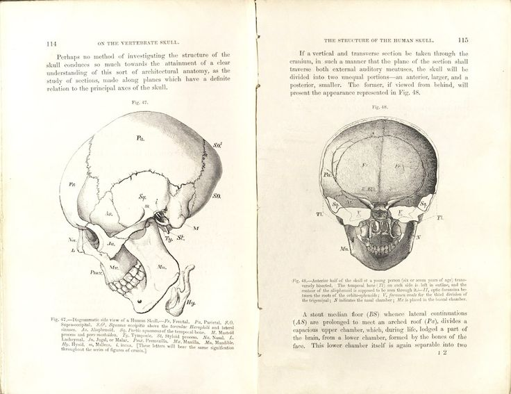 Rare books - Structure of the Human Skull: Human Skull, Rare Books