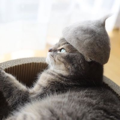 These Cats In Hats Made From Their Own Hair Are Completely Adorable be1f2fe8eab0