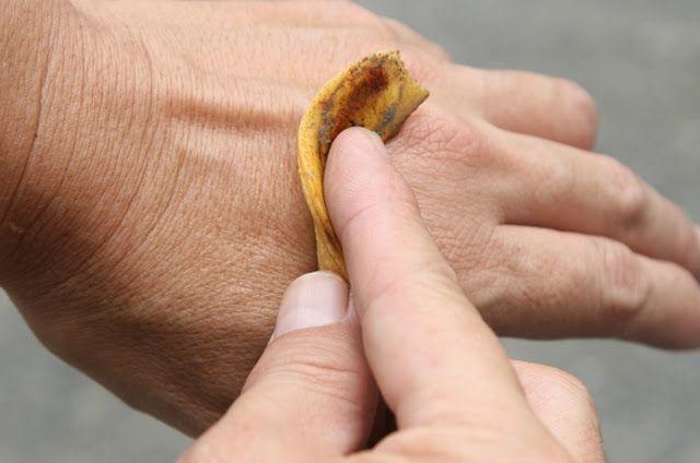 9 formas de usar a casca da banana que você precisa conhecer | Cura pela Natureza.com.br