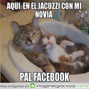 Tortuga Vacilona - Inicio Facebook