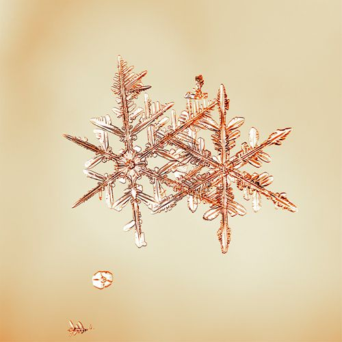 Gorgeous photography. Would make a sweet wedding present (if the 8x8s were still available).: Snowflakes Mike, Doug Starn, Snowflake Photography, Snowflakes Snowflakes, Snow Crystals, Pink Snowflakes So, Annsheart Snowflakes, Snow Flakes, Photography Inspiration