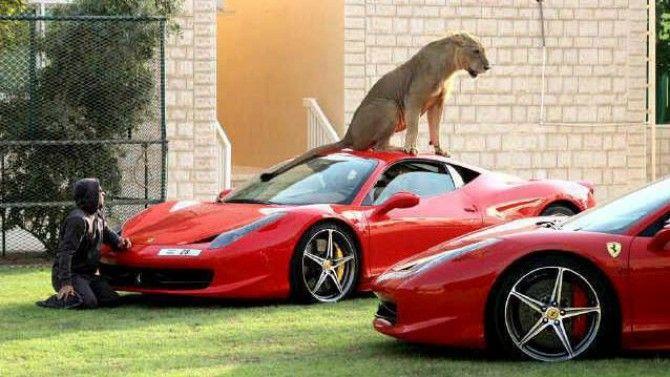 www.romeoauto.it #formula1 #motors #concessionaria #passion #automobili #ferrari #leon #red #smile