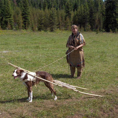 Indian Survival Skills: Great Plains Indians Used Dogs To Carry